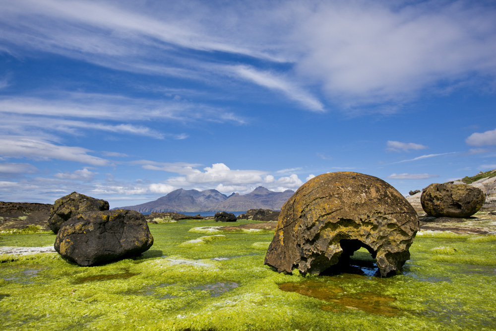 Giant erratic boulders on a seaweed bed on the Isle of Eigg, Inner Hebrides, Scotland, United Kingdom, Europe